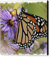 Wildflower Visitor Canvas Print
