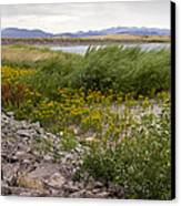 Wildflowers In The Wind Canvas Print by Dana Moyer