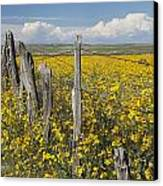 Wildflowers Surround Rustic Barb Wire Canvas Print by David Ponton