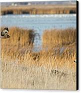 Wildlife Photographer's Dream Canvas Print by Loree Johnson