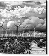 Wind Dancer Palm Springs Canvas Print by William Dey