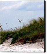 Wind In The Seagrass Canvas Print