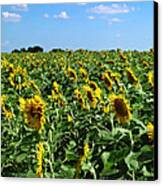 Windblown Sunflowers Canvas Print by Robert Frederick