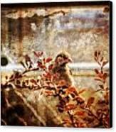 Window Wren Canvas Print by Dan Quam