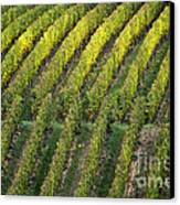 Wine Acreage In Germany Canvas Print