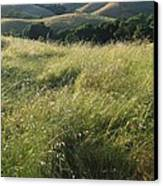 Wine Country Hills Canvas Print
