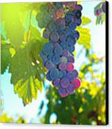 Wine Grapes  Canvas Print by Jeff Swan