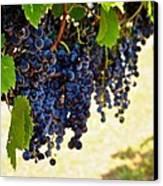 Wine Grapes Canvas Print by Kristina Deane
