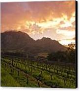 Wineland Sunrise Canvas Print by Aaron Bedell