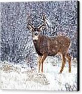 Winter Buck Canvas Print by Darren  White
