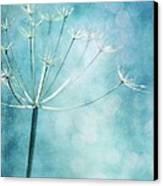 Winter Colors Canvas Print by Priska Wettstein