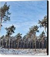 Winter Forest Covered With Snow Canvas Print