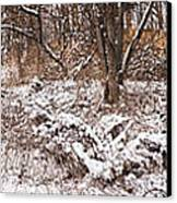 Winter Forest Panorama Canvas Print by Elena Elisseeva