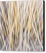 Winter Grass Abstract Canvas Print