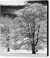 Winter Horse Chestnut Trees Monochrome Canvas Print