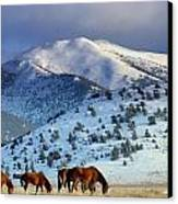 Winter In The High Desert  Canvas Print by Jeanne  Bencich-Nations
