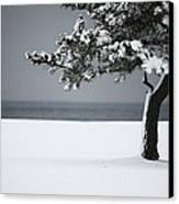 Winter Quiet Canvas Print