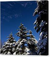 Winter Spruce Canvas Print by Steven Valkenberg