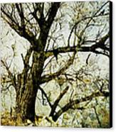 Winter Tree At The  Lake Shore  Canvas Print by Ann Powell