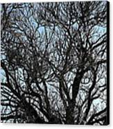 Winter Tree Hill End Nsw Canvas Print by Ian  Ramsay