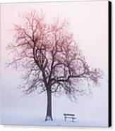 Winter Tree In Fog At Sunrise Canvas Print by Elena Elisseeva