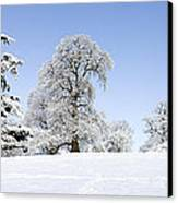 Winter Tree Line Canvas Print by Tim Gainey