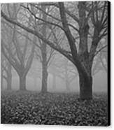 Winter Trees In The Mist Canvas Print by Georgia Fowler