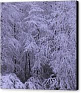 Winter Wonderland 1 Canvas Print by Mike McGlothlen