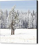Winter's Coat Canvas Print by Dee Cresswell