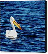 Wisconsin Pelican Canvas Print by Thomas Young