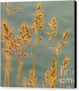 Wispy Grass Canvas Print by Sarah Crites