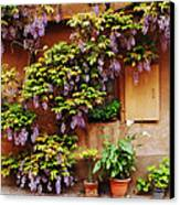 Wisteria On Home In Zellenberg 4 Canvas Print