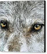 Wolf Wisdom Canvas Print