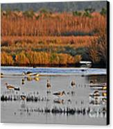 Wonderful Wetlands Canvas Print by Al Powell Photography USA