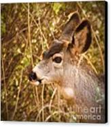 Wondering Deer Canvas Print by Kimberly Maiden