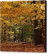 Woodland Path Canvas Print by Bruce Bley
