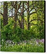 Woodland Phlox 2 Canvas Print