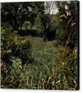 Woods Near My Home Canvas Print by Scott Kingery
