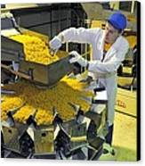 Worker With Pasta Packing Machine Canvas Print by Science Photo Library