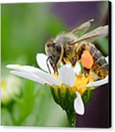 Working Bee Canvas Print by Ivelin Donchev