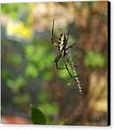 Writing Spider Canvas Print by Nelson Watkins