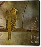 Yellow Bird Resting Canvas Print by Pam Vick