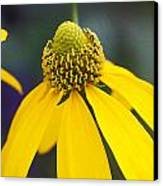Yellow Cone Flower Rudbeckia Canvas Print