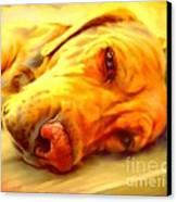 Yellow Labrador Portrait Canvas Print
