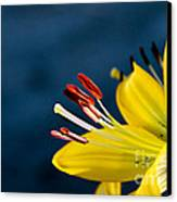 Yellow Lily Stamens Canvas Print by Robert Bales