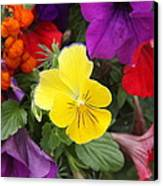 Yellow Pansy  Canvas Print by Donald Torgerson