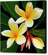 Yellow Plumeria Canvas Print by Ben and Raisa Gertsberg
