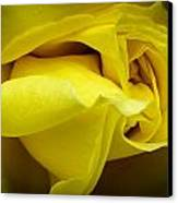 Yellow Rose Close Up. Canvas Print by Slavica Koceva