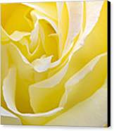 Yellow Rose Canvas Print by Svetlana Sewell