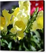 Yellow Snapdragons II Canvas Print by Aya Murrells